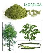 MORINGA POWDER 8 OZ.